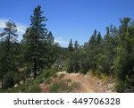 trail leading past tall pines ... | Shutterstock . vector #449706328