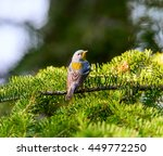 a small warbler of the upper... | Shutterstock . vector #449772250