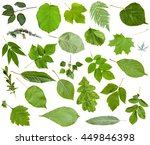 Set Of Varuious Green Leaves...
