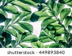 green leaf pattern on the... | Shutterstock . vector #449893840