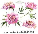 Watercolor  Vector Pink Peony ...