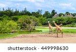 group of giraffes in a safari... | Shutterstock . vector #449998630