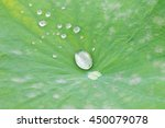green lily pads with dew  in a... | Shutterstock . vector #450079078
