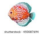 Discus Fish Or Pompadour Fish...