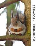 A Round Squirrel In Winter Fur...