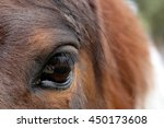 Horses Eye On You