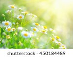 chamomile field flowers border. ... | Shutterstock . vector #450184489