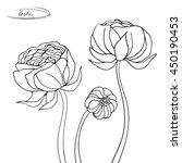 flowers ranunculus isolated on... | Shutterstock .eps vector #450190453