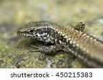 macro photo on head and eye of... | Shutterstock . vector #450215383