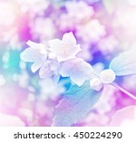 white jasmine. the branch... | Shutterstock . vector #450224290