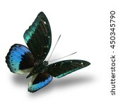 Small photo of The beautiful flying velvet blue and green butterfly (Common Archduke, Lexias pardalis) on white background with soft shadow beneath, fascinated nature