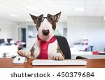 Business Dog Using His Compute...
