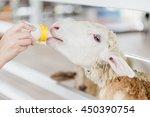 white sheep has been feeding... | Shutterstock . vector #450390754