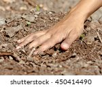 the forest soil on the hand... | Shutterstock . vector #450414490