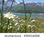 Flower And Fields In Mountain...