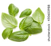 sweet basil herb leaves handful ... | Shutterstock . vector #450603988