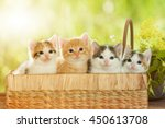 Four Kittens Sitting In A Basket