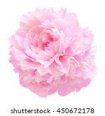 pink peony flower isolated on... | Shutterstock . vector #450672178