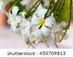 white yellow plumeria flowers... | Shutterstock . vector #450709813