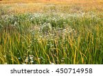 Landscape Of Field With Thick...