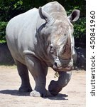 Small photo of Rhinoceros also known as rhino, is a group of five extant species of odd-toed ungulates in the family Rhinocerotidae. Two of these species are native to Africa and three to southern Asia.