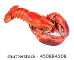 boiled lobster isolated on... | Shutterstock . vector #450884308