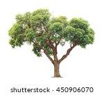 green and yellow beautiful big... | Shutterstock . vector #450906070