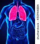 human respiratory system... | Shutterstock . vector #450944884