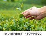 natural selected  hand finger... | Shutterstock . vector #450944920