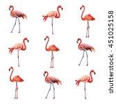 flamingo birds pattern vector | Shutterstock .eps vector #451025158