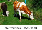 two cows | Shutterstock . vector #45104140