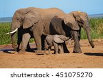 elephant family with baby... | Shutterstock . vector #451075270