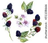 Watercolor Blackberries  Black...