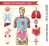 chart showing organs of human... | Shutterstock .eps vector #451111030