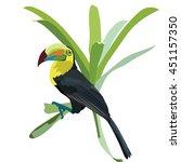 toucan bird vector isolated | Shutterstock .eps vector #451157350