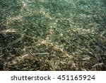 underwater texture and fauna in ... | Shutterstock . vector #451165924
