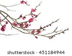 Plum Blossom Isolated On White...