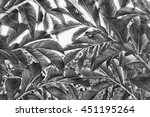 background black and white...   Shutterstock . vector #451195264