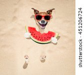 jack russell dog  buried in the ... | Shutterstock . vector #451206724