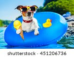 Dog On  Blue Air Mattress  In...