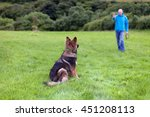 Stock photo german shepherd dog with a collar sat on grass looking at his owner view from behind the dog with 451208113