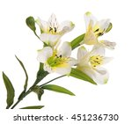 Stock photo bunch beautiful branch flowering plant with white flower on white background isolated 451236730