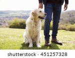 Stock photo close up of golden retriever on walk in countryside 451257328