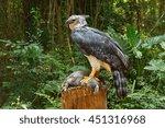 Harpy Eagle Ready To Eat Bunny