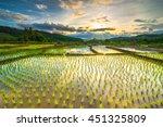 beautiful rice fields | Shutterstock . vector #451325809