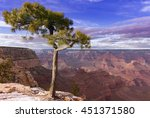 pine tree growing at the very... | Shutterstock . vector #451371580