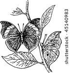 butterfly | Shutterstock .eps vector #45140983