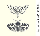 moths. vector hand drawn... | Shutterstock .eps vector #451427896