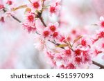 floral background blur or... | Shutterstock . vector #451597093