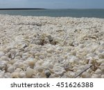 Shell Beach Shark Bay  Western...
